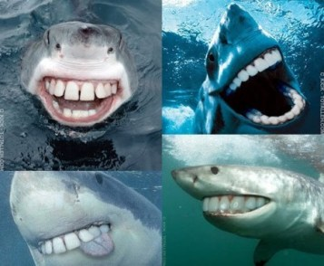 requin humour fun drole