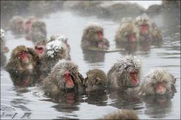 arctic monkeys bain bath