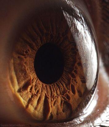your_beautiful_eyes_20