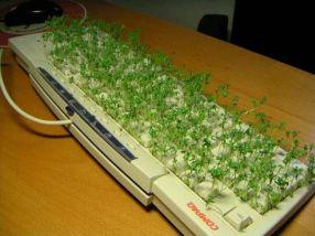panneau image insolite clavier lentilles