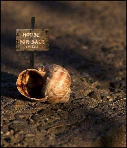 panneau image insolite maison a vendre escargot