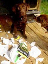 entrainement des chiens pour les nuls
