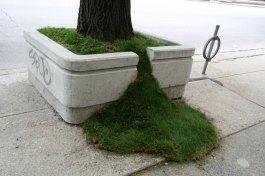 planter-art arbre pelouse deborde