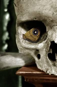 crane papillon oeil