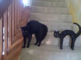 chat escalier