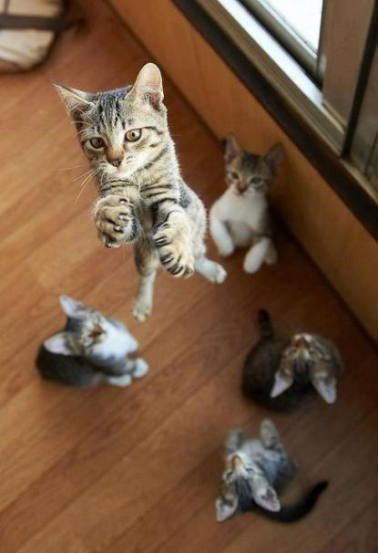 chaton saut