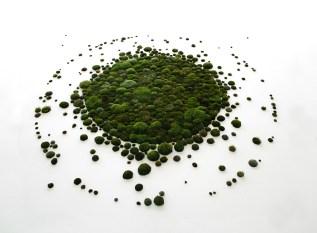 graph vegetal ronds 2.jpg