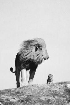 lion-lionceau-noir-et-blanc