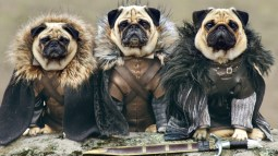 the pugs of westeros 00