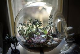 01-paula hayes living terrarium