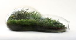02-paula hayes living terrarium