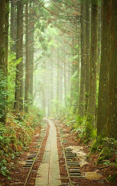 chemin foret pave