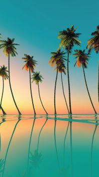 palmier piscine sunset