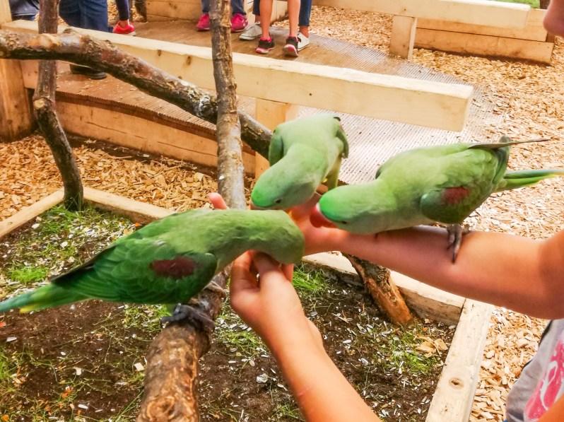 papugi w warszawie