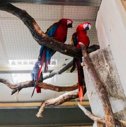 papugarnia warszawa