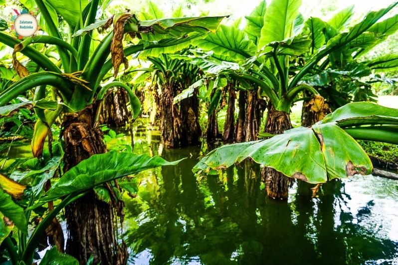 park botaniczny mauritius