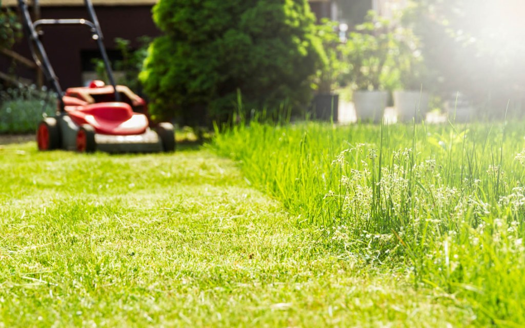 Mow your lawn and clean the debris