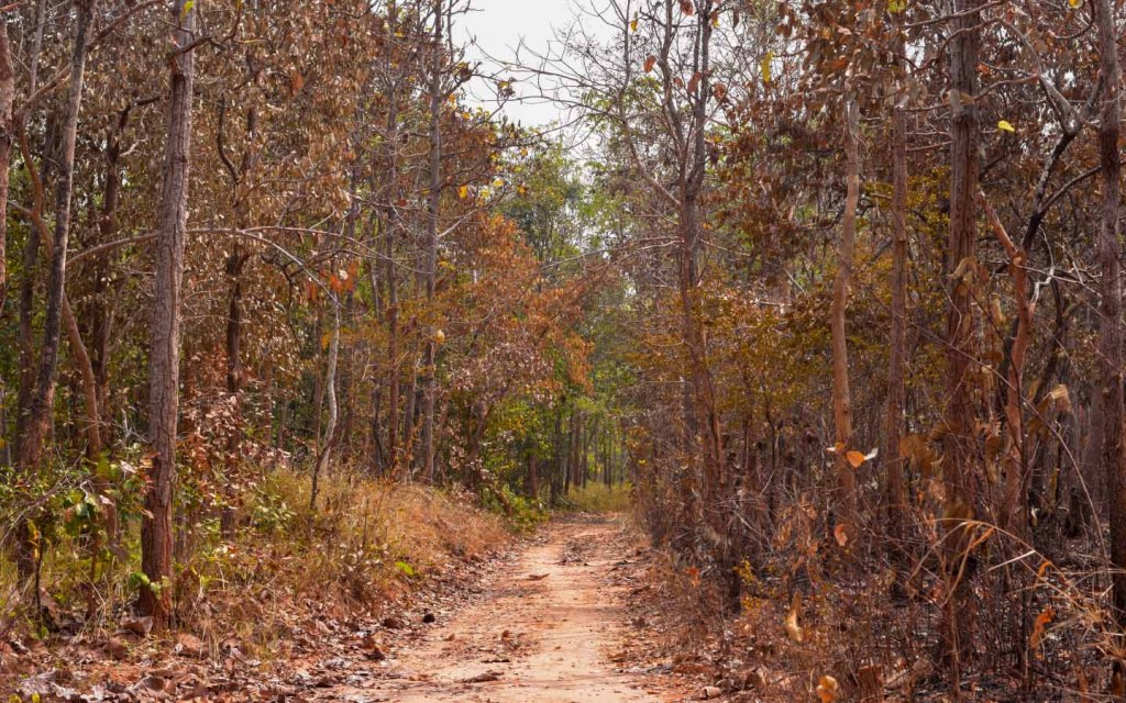 Tropical dry deciduous forests are also known as Tropical Dry Forests
