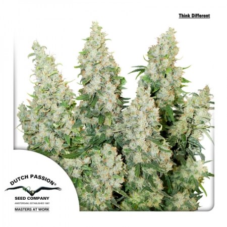 a step by step guide to growing weed, cannabis growing guide, cannabis lifestyle, cannabis plant help, cannabis plant problems, CBD, How to grow legal cannabis, marijuana growers forum, marijuana growing expert advice, marijuana growing tips, THC, tips for cannabis growing, tips for marijuana growers