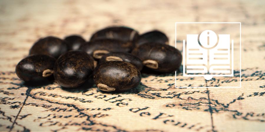天鹅绒豆:您需要知道的一切