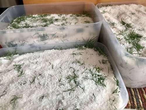 Pescado marinado en sal, azúcar y eneldo