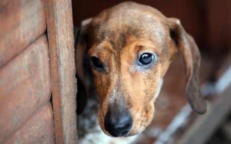 adozioni cani a distanza