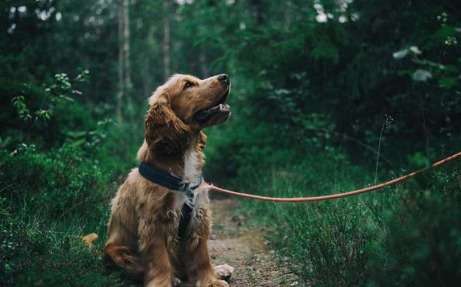 adozione cane quali sono le alternative
