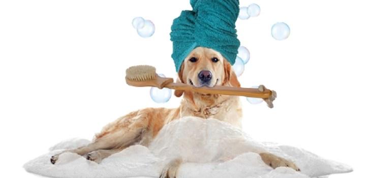 Bagno terapeutico cani e gatti - Zampinamica.com