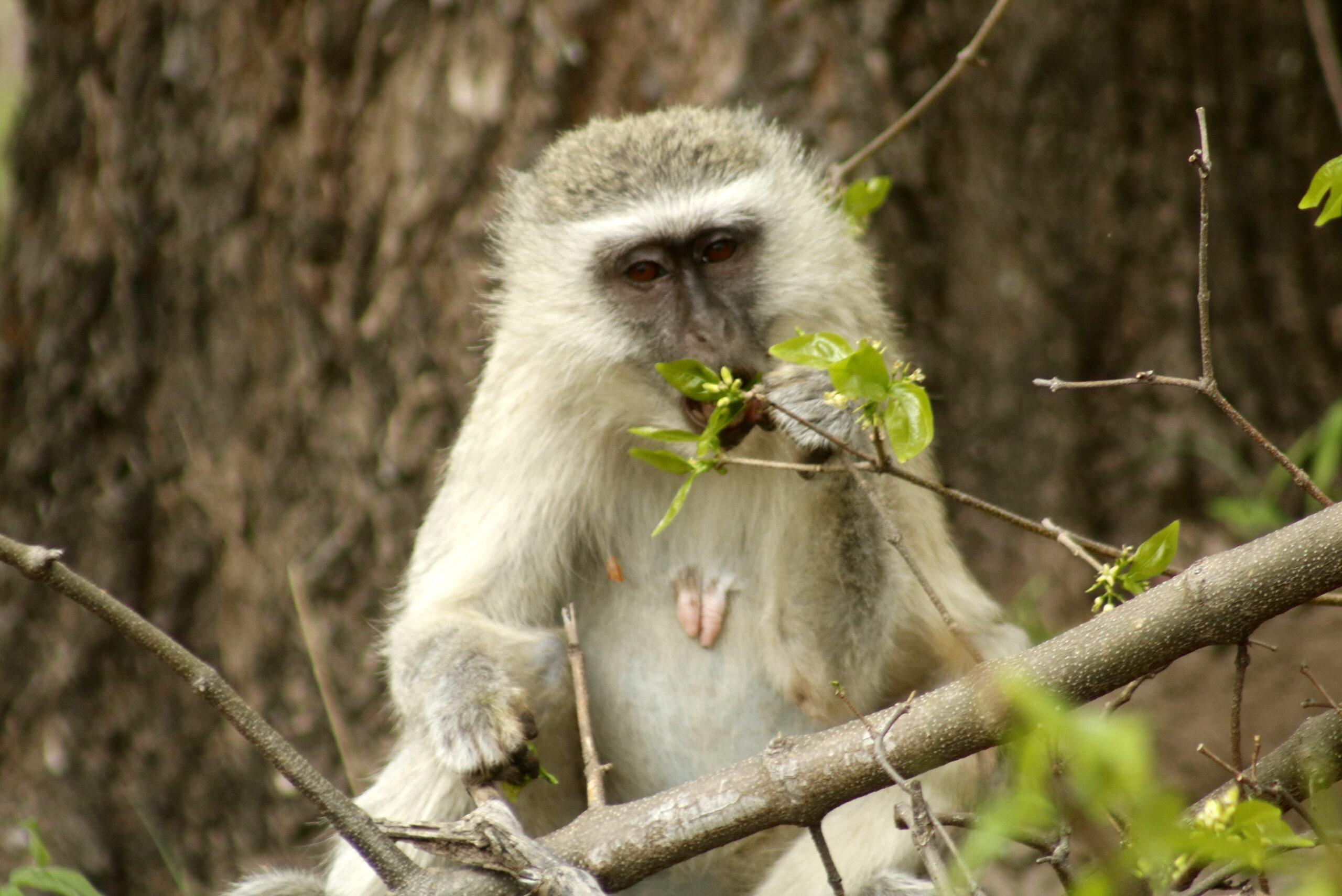 On Safari Drive in Mosi-oa-Tunya NP