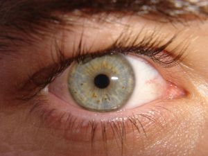 oog close up wikimedia commons