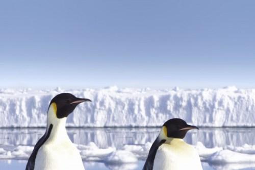 Antarctic ram ah cian umhhnak Penguin ramsa