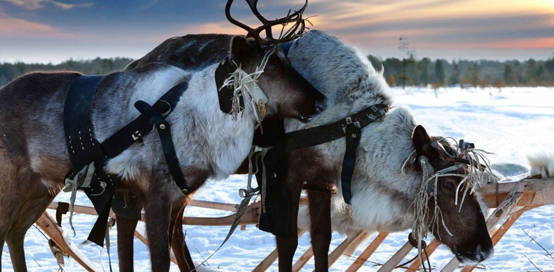 renos en Navidad