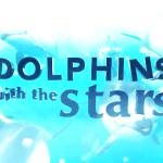 """SIC suspende """"Golfinhos com as Estrelas"""""""