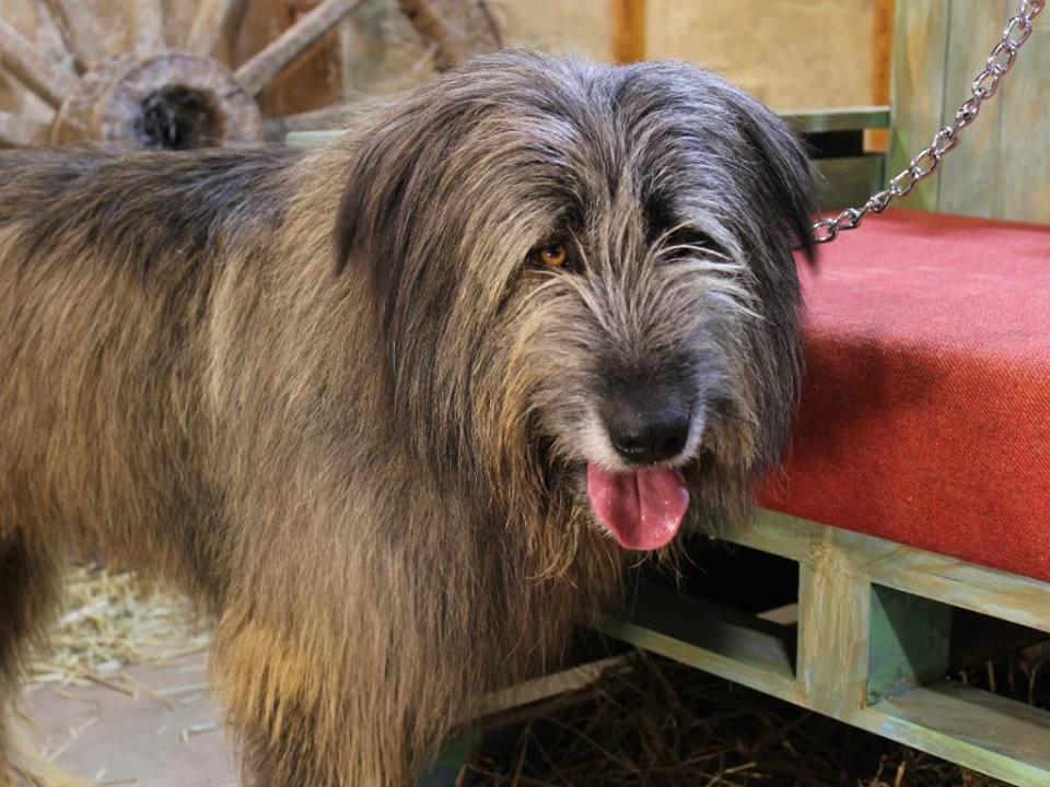 """Cão de """"A Quinta"""" gera revolta nas redes sociais"""