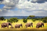 Selous Game Rserve Ruaha Mikumi Parks Safari Tanzania Zara Tours 4