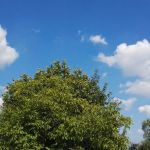 Mispelbaum beim Mittelpunktstein
