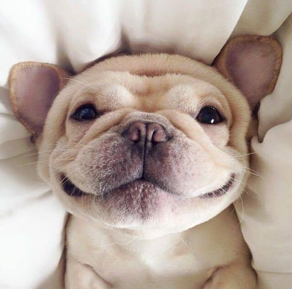65 cute puppy pictures