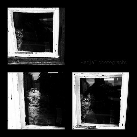 Lepljenka maček1mm