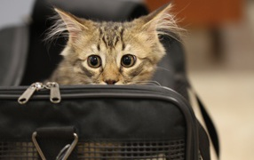 Image result for frightened kitten