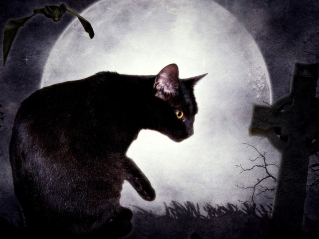 Cute Couple Love Wallpaper Backgrounds Black Cat And The Moon Wallpapers And Images Wallpapers