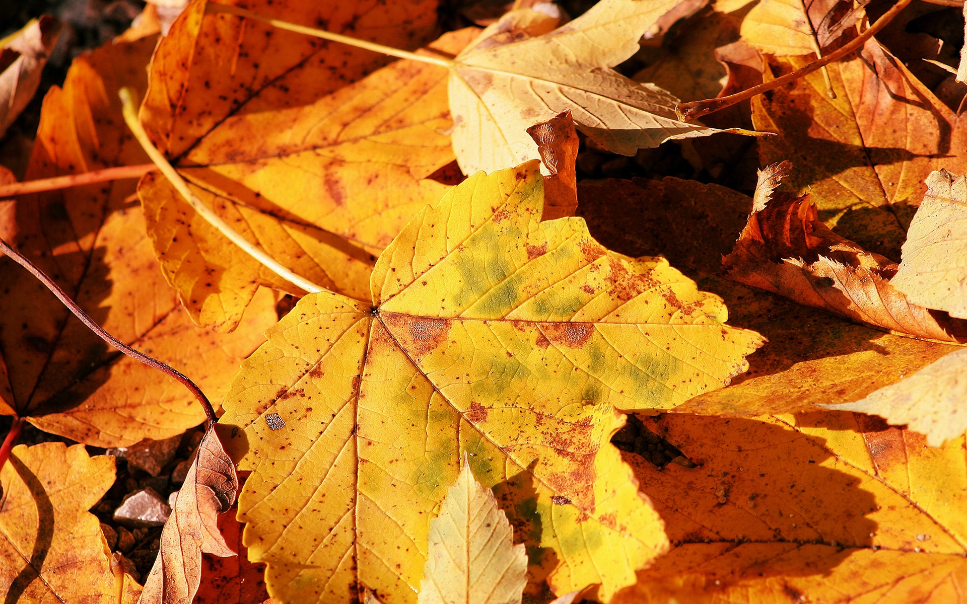 Fall Leaves Desktop Wallpaper Free Autumn Leaves Close Up Wallpapers And Images Wallpapers