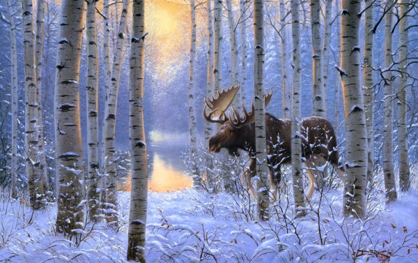 Moose in Winter Forest