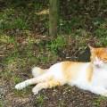 ネコ 瞑想中