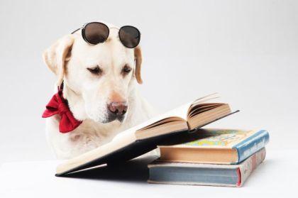 読書する 犬