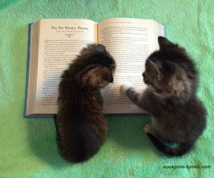書物で 議論する 猫