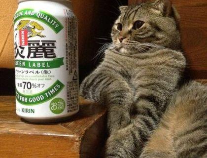ビールの 好きな 猫