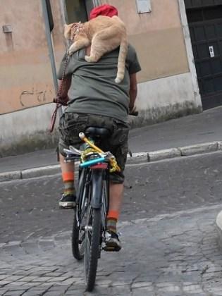 安全に サイクリングをする猫