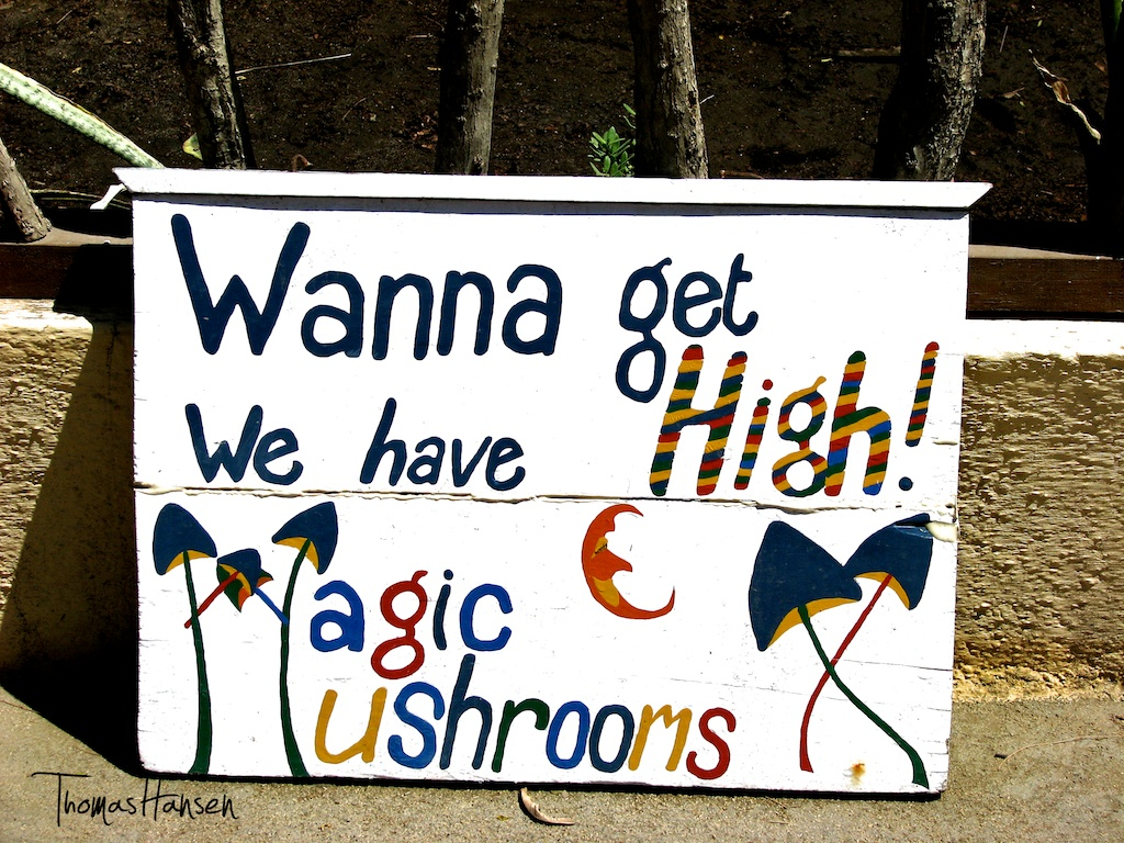 magic-mushrooms selling