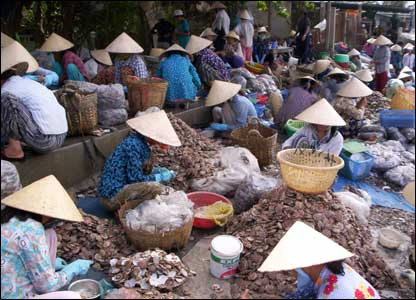 Vietnamese women hard at work sorting shells in a marketplace