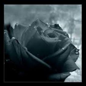 Dark flower, needs life,